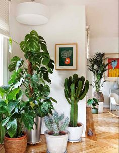 Clean white paint simple plants living room
