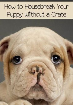 DIY Dog Hacks - Housebreak Your Puppy Without a Crate - Training Tips, Ideas for Dog Beds and Toys, Homemade Remedies for Fleas and Scratching - Do It Yourself Dog Treat Recips, Food and Gear for Your Pet http://diyjoy.com/diy-dog-hacks #puppytrainingcrateideas #doghacks