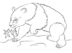 Red Panda Coloring Pages Free Coloring Pages For Kids Panda