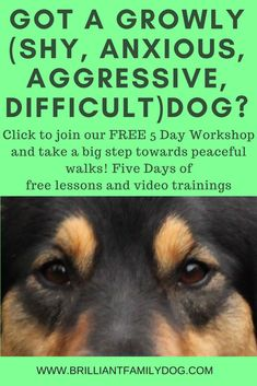 Dog Behavior Free 5 Day online Video Workshop to show you a new - force-free - way to change your reactive dog and enjoy walks again Dog Training Books, Training Your Puppy, Dog Training Tips, Potty Training, Reactive Dog, Dog Games, Aggressive Dog, Dog Barking, Family Dogs