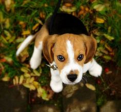 ***I see you way up there mister squirrel. You can come down anytime soon!! I am waiting for you!! #Beagle