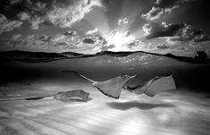 Google Image Result for http://static7.dengedenge.com:8080/wp-content/uploads/2010/08/Black_and_White_Underwater_Photos_.jpg