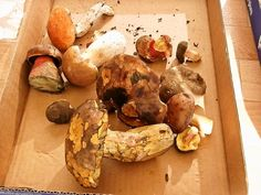 Hubový pekáč č.3 - so šalviou (fotorecept) - recept | Varecha.sk