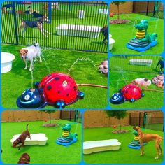 2nd Family Dog Park in the Dallas Texas area Dog Park knows how to keep the dogs cool. From My Splash Pad portable splash pad line, to pools and tent misters they take care of your dogs.