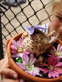 the fairy mushroom garden