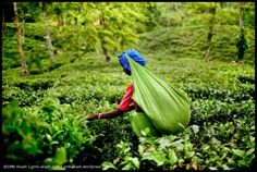 @gmb_akash #travel #photography workshop 2-9 May Photography Institute, One Light, Pretty Pictures, Sri Lanka, Fields, Tea, Adventure, World, Green