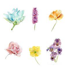 Set van zes bloem Aquarel schilderijen Kunstprint door Zendrawing, €70.00