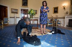 The Obamas and their pets Sunny and Bo wait to greet visitors in the Blue Room during a White House tour.