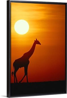 """Wildlife art - """"Silhouette of a giraffe at sunrise, Serengeti National Park, Tanzania"""" by Medford Taylor from The National Geographic Collection at Great BIG Canvas. Disney Canvas Paintings, Easy Paintings, Animal Paintings, Sillouette Painting, Giraffe Painting, Easy Canvas Art, Big Canvas, Sunrise Painting, Sunset Canvas"""