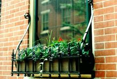 decorative wrought iron window boxes