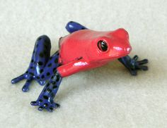 Poison Dart Frogs For Sale in Wigan, Greater Manchester. Funny Frogs, Cute Frogs, Geckos, Dart Frogs For Sale, Strawberry Poison Dart Frog, Amazing Frog, Frog Pictures, Poison Dart Frogs, Frog And Toad