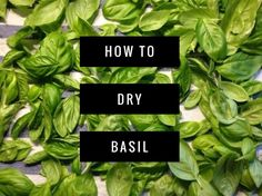 Most people are familiar with basil in its dried, crushed form. Some are familiar with it in its fresh form as well. So how do you get it from fresh to dried? It's not hard at all and requires no special tools or equipment. There are two options for drying basil: air drying and oven …
