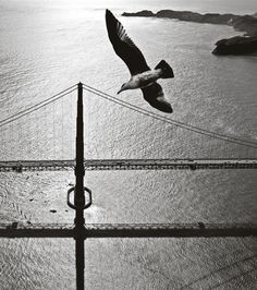 Peeking Behind the Lens of Fred Lyon, SF's Most Iconic Photographer #UpOutSF