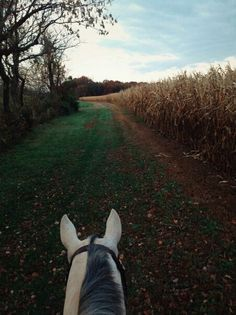 this is a perfect picture- riding on a horse in between a woods and corn field... <3