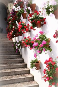 The Geraniums of Cordoba, Spain, above. The... | Wallace Gardens