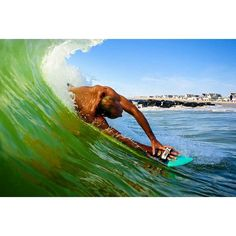 Slyde Handboards put epic wave riding in the palm of your hand.  Bodysurfing extreme www.slydehandboards.com