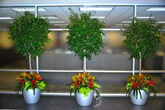 Creating Interiorscapes to Fit Your Office's Needs | Interior ...