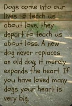 Dogs come into our lives to teach us about love, they depart to teach us about loss.  A new dog never replaces an old dog, it merely expands the heart. If you have loved many dogs your heart is very big.