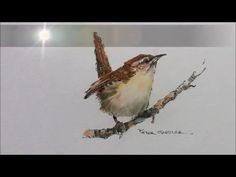 How to paint a bird, Wren tutorial. Quick and easy! With Peter Sheler - YouTube