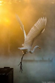 Bird: a beautiful heron Pretty Birds, Love Birds, Beautiful Birds, Animals Beautiful, Cute Animals, Wild Animals, Baby Animals, Beautiful Things, Beautiful Pictures