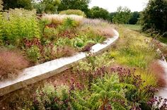 Contemporary Landscape by Adam Woodruff + Associates, Garden Artisans - Plants shown: (click photo to see the plants tagged):