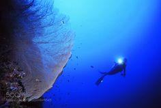 Sea fan by CesareBoneschi