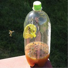 """home-made fly trap The """"recipe"""" I'm going to use is: 3"""