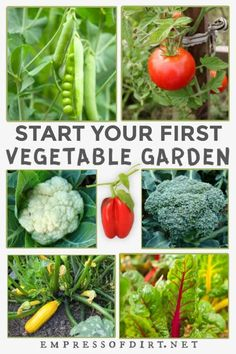 Want to start a vegetable garden from scratch? This beginner guide shares everything you need to know to get started today. Read the tips, get your seeds ordered and start growing. Vegetable Garden For Beginners, Starting A Vegetable Garden, Backyard Vegetable Gardens, Veg Garden, Vegetable Garden Design, Garden Care, Gardening For Beginners, Green Garden, Garden Bed