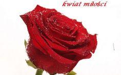 Najpiękniejsze Kwiaty KOCHAM Lubię Uwielbiam Słodkością Inspirują:  Posyłam kwiaty ...Posyłam kwiaty - niech powiedzą...