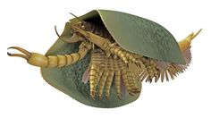 Tokummia katalepsis, a newly discovered mandibulate, is helping paleontologists connect other species in the tree of life.