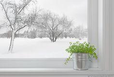 Wenn ihr denkt, eure Zimmerpflanzen haben es im Winter auf der Fensterbank gut, irrt ihr euch. Was eure Pflanzen daheim wirklich brauchen, erklären wir in unserem Magazin. #IDFM #Tipps