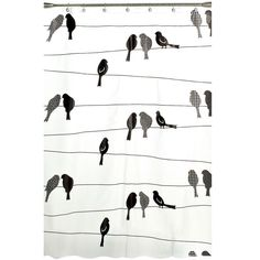 Saturday Knight Birds on a Wire 70 in. W x 72 in. L PEVA Shower Curtain-N0977000100001 - The Home Depot