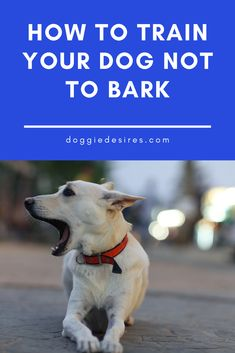 How To Train Your Dog Not To Bark. Dog owners | doggie enthusiasts | raising a dog | raising a puppy | dog owner tips | dog training | dog health tips | gifts for dogs | gifts for dog owners | dog care tips | Dog Lovers | Doggie Desires Dog Health Tips, Dog Health Care, Millionaire Lifestyle, Dog Care Tips, Pet Care, Dog Nutrition, Nutrition Guide, Dog Food Delivery, Dog Boarding
