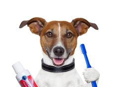 Aprenda a cuidar dos dentes de seu pet http://farofinopet.blogspot.com.br/2013/01/aprenda-cuidar-dos-dentes-de-seu-pet.html