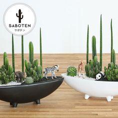 Succulent Bowls, Succulent Bonsai, Succulent Arrangements, Cacti And Succulents, Planting Succulents, Cactus Plants, Garden Plants, Mini Cactus Garden, Cactus Flower