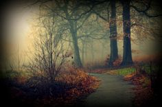 Enchanted Path by Allan Cabrera on 500px