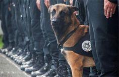 Diesel, la perra que murió en acción antiterrorista en Francia es considerada una heroína | Virales