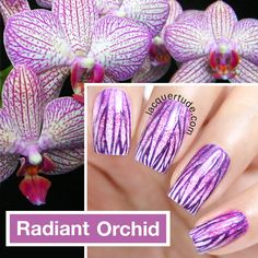 piCture pOlish 'Radiant Orchid' nails features by Lacquertude features 'Bright White, Flirt, Focus & Ultra Violence' WOWZA