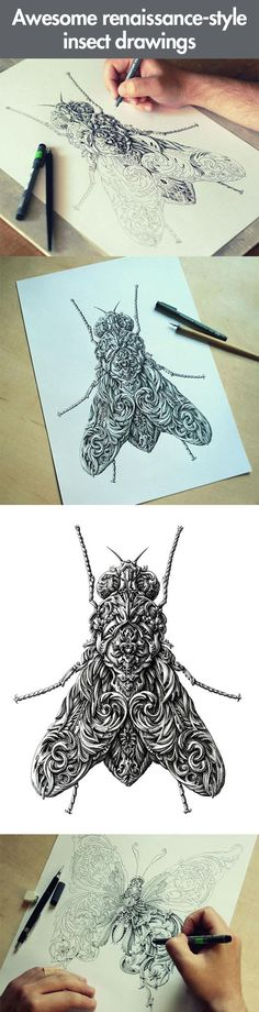 Renaissance-style insect drawings… can I have the butterfly one as a tattoo?