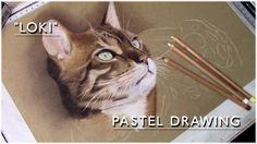 """Such a talented artist! Beautiful Bengal Cat """"Loki"""" - Pastel Drawing 