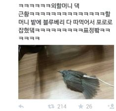 [웃긴글모음]재미있고 웃긴 트위터/트위터 글모음 : 네이버 블로그 Mbti, Funny Cute, Haha, Funny Pictures, Funny Memes, Humor, Animals, Birds, Fanny Pics