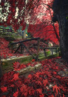 red paradise - Trikala, Greece
