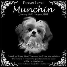 Personalized Shih Tzu Pet Memorial 12x12 Engraved Black Granite Grave Marker Head Stone Plaque MUN1 -- Check out the image by visiting the link. This is an Amazon Affiliate links.