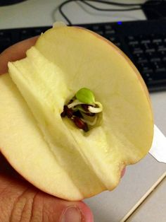 I Cut And Apple In Half This Morning And Found The Seeds Had Started Sprouting Inside The Apple