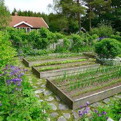 Mias Landliv: A few garden photos