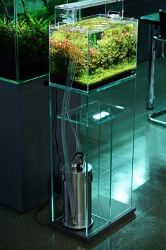 ADA Nature Aquarium Gallery. With ADA Super Jet Filter + Lily pipes, and Aquasky LED Lightning.