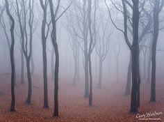 Image from http://www.waylandscape.co.uk/assets/images/Tandlewood-800.jpg.