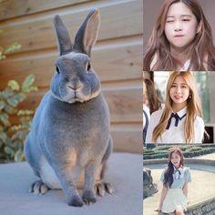 ChineseZodiac&KPOP // Rabbit // Dayoung of CosmicGirls WJSN