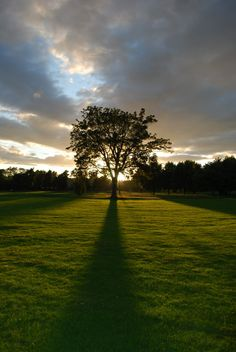 'Sunset on the Inch' - Duncan Sanderson | Sunseting behind a tree on Perth's South Inch