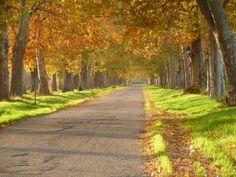 colgando colores de otoño by pegatina1, via Flickr